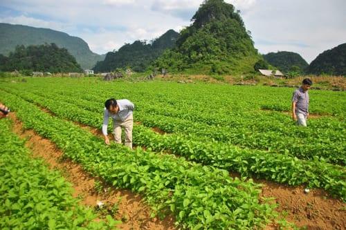 Qualified medicinal herbs create credibility for Hikari EXIM