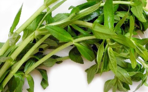 Rau ngổ - rau gia vị -coriander