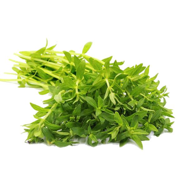 rau ngo - rau gia vị -coriander