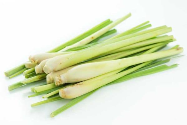 Lemongrass- Cây sả