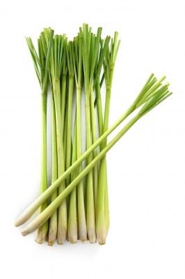 lemongrass- spices vegetable