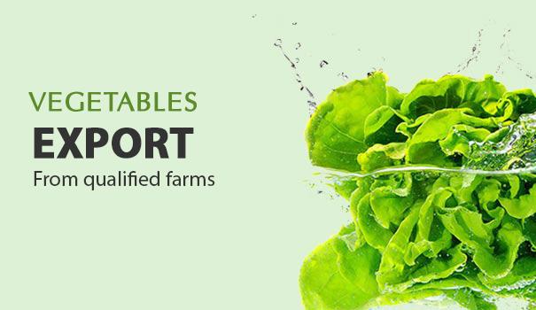 vegetables export