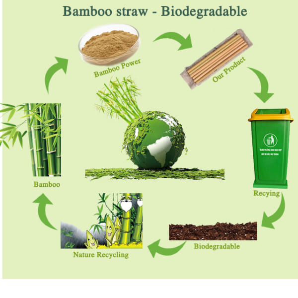 Easy biodegradable bamboo straws